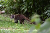 Costa Rica 2019 (Tierbilder)