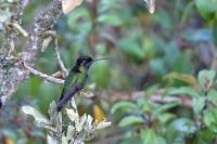 Costa Rica 2019 (Kolibris)